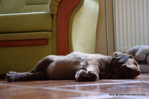 Śpię, nie przeszkadzać!